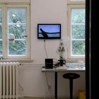 2019_IRIS-A-MAZ_Ausstellung_Himmelblau_Kuenstlerhaus-im-Schlossgarten_Cuxhaven_23